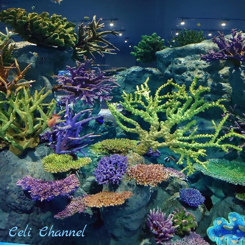 DMMかりゆし水族館の珊瑚と熱帯魚