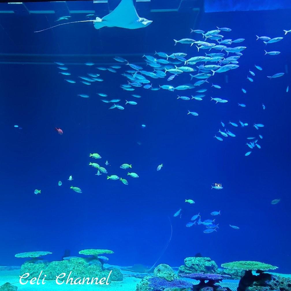 DMMかりゆし水族館のエイ